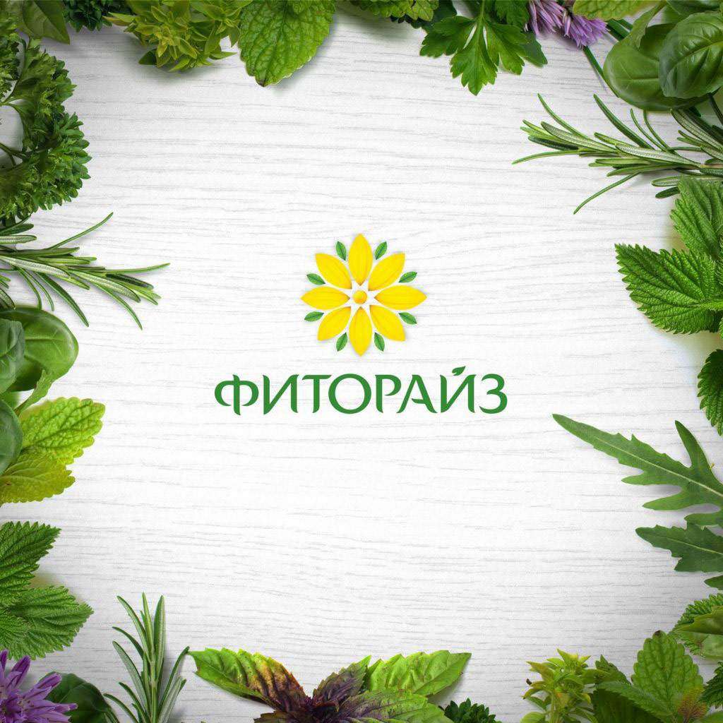 Разработка логотипа и фирменного стиля для компании Fitorise